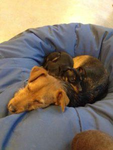 hunde beim kuscheln und schlafen auf grossem sitzsack bei dogs place in koeln