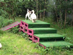 hunde beim spielen auf einer platform aus holzpaletten bei dogs place in koeln