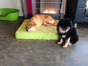 hunde entspannen drinnen im warmen bei der hundebetreuung dogs place