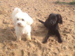 hunde im sand bei der hundebetreuung dogs place in neuss
