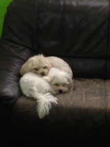 hunde kuscheln und schlafen auf einer couch bei der hundebetreuung von dogs place in koeln