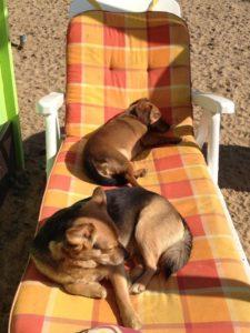 hunde liegen auf einem gartenstuhl und geniessen die sonne