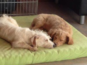 hunde schlafen schnauze an schnauze auf gruener matratze bei dogs place in koeln