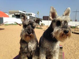 hunde sitzen auf einer holzpalette bei der hundebetreuung dogs place