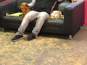 hunde sitzen mit ihrem herrchen auf der couch