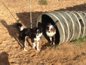 hunde spielen mit stofftunnel bei dogs place in koeln