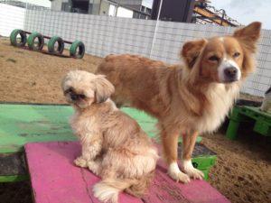 hunde stehen auf einer kleinen platform im freien bei dogs place in neuss