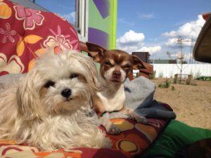 kleine hunde geniessen die sonne und schauen neugierig in die kamera
