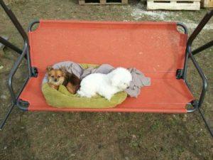 kleine hunde in gruenem hundekorb auf roter gartenschaukel auf dem gelaende von dogs place