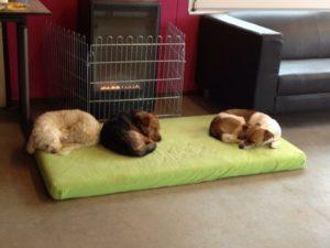 hunde beim schlafen auf gruener matratze bei der hundebetreuung dogs place