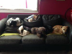 hunde beim mittagsschlaf auf einer couch bei dogs place