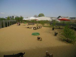 gelaende mit sandboden und spielmoeglichkeiten fuer hunde bei dogs place