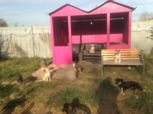 grosse pinke hundehuette mit couch und bank fuer hunde bei dogs place in koeln
