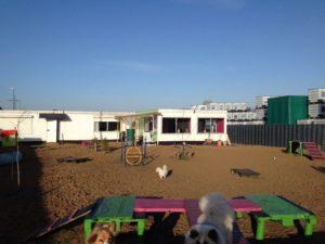 grosser hundespielplatz bei dogs place