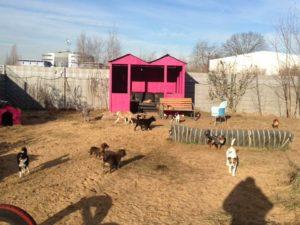 grosses aussengelaende zum spielen bei dogs place in koeln