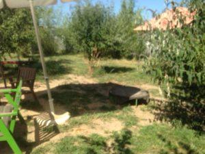 gruener garten bei der hundebetreuung dogs place in koeln