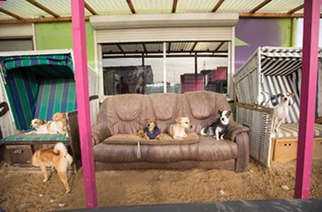 gruppe von hunden auf einer couch im freien auf dem gelaende von dogs place