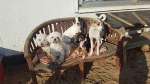 gruppe von hunden geniesst die sonne auf einer holzbank im freien bei dogs place
