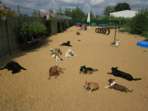gruppe von hunden liegt auf dem sand und geniesst die sonne bei dogs place in koeln