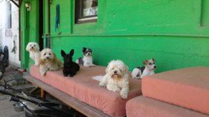 gruppe von hunden liegt auf rotem polster bei der hundebetreuung dogs place in koeln