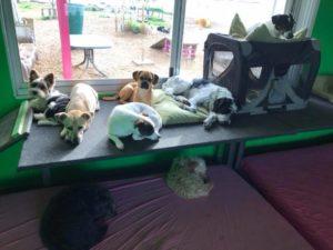 gruppe von hunden ruht sich in der hundebetreuung dogs place vom spielen aus