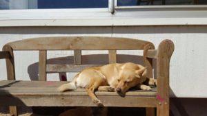 hund geniesst die sonne auf einer holzbank im freien