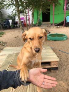 hund legt seine pfote auf die hand einer hundebetreuerin bei dogs place in koeln