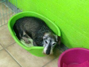 hund liegt in gruenem hundekorb bei dogs place in koeln