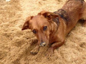 hund schaut unschuldig beim buddeln in die kamera bei dogs place in koeln