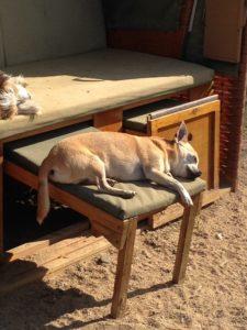 hund schlaeft auf einer gepolsterten bank in der sonne bei dogs place in koeln