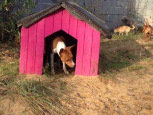hund schnueffelt an pinker hundehuette bei dogs place in koeln