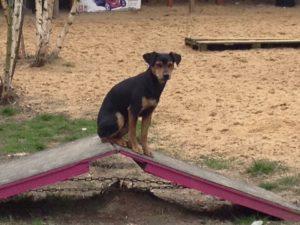 hund sitzt auf kleiner holzrampe bei dogs place in koeln