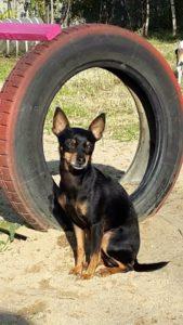 hund sitzt vor altem autoreifen und schaut verwirrt in die gegend bei dogs place in koeln