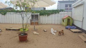hunde auf dem gelaende zur hundebetreuung von dogs place in neuss