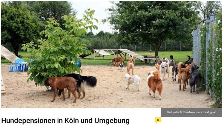 hunde auf dem hundespielplatz im freien