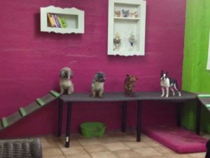 hunde auf gehobener holzplattform bei dogs place in koeln