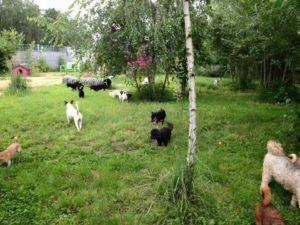 hunde beim erkunden des gartengelaendes bei dogs place in koeln