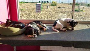hunde beim schlafen am fenster bei der hundebetreuung dogs place in neuss