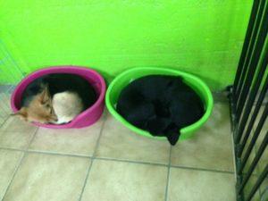 hunde beim schlafen im hundekorb bei dogs place in koeln