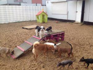 hunde beim spielen auf dem gelaende von dogs place in neuss