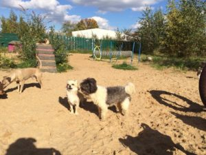 hunde beim spielen bei der hundebetreuung dogs place in koeln