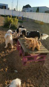 hunde beim spielen bei der hundebetreuung dogs place in neuss