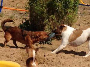 hunde beim spielen bei dogs place in neuss