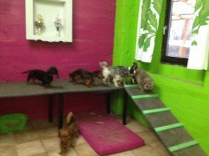 hunde beim spielen im innenbereich von dogs place in koeln
