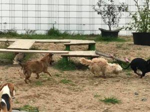 hunde beim toben und spielen bei der hundebetreuung dogs place in neuss