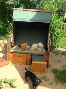 hunde entspannen sich in einem strandkorb bei dogs place in koeln