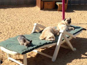 hunde geniessen die sonne auf einer gartenliege im freien bei dogs place in koeln