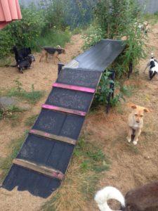 hunde im aussenbereich mit rampe zum spielen bei dogs place in koeln