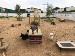 hunde im freien auf dem gelaende von dogs place in neuss