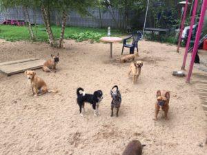 hunde im grossen aussenbereich von dogs place in koeln